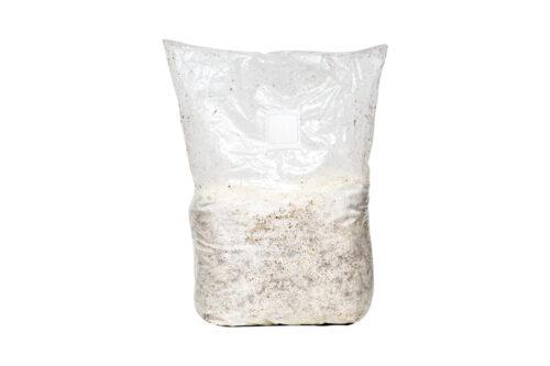 Sawdust Mushroom Spawn