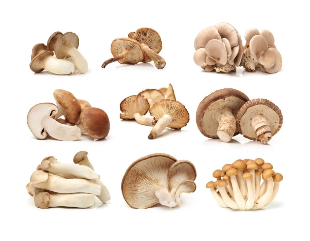 How To Grow Gourmet Mushrooms at Home