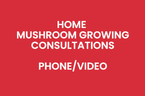 Home Mushroom Growing Consultations By Phone or Video